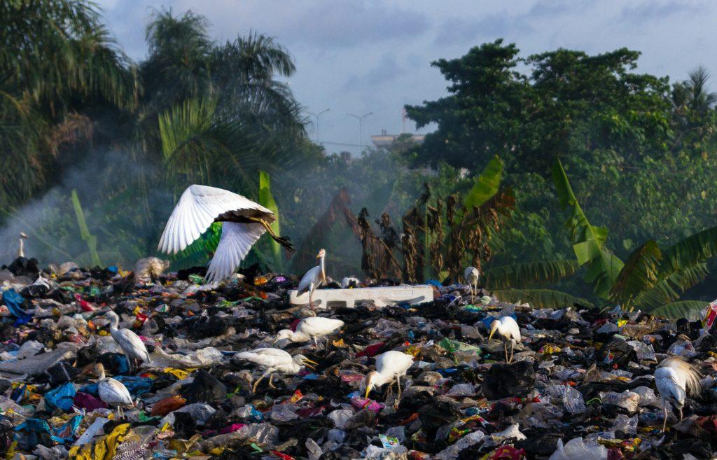 Leiderschapslessen uit afval | Green Culture Lab